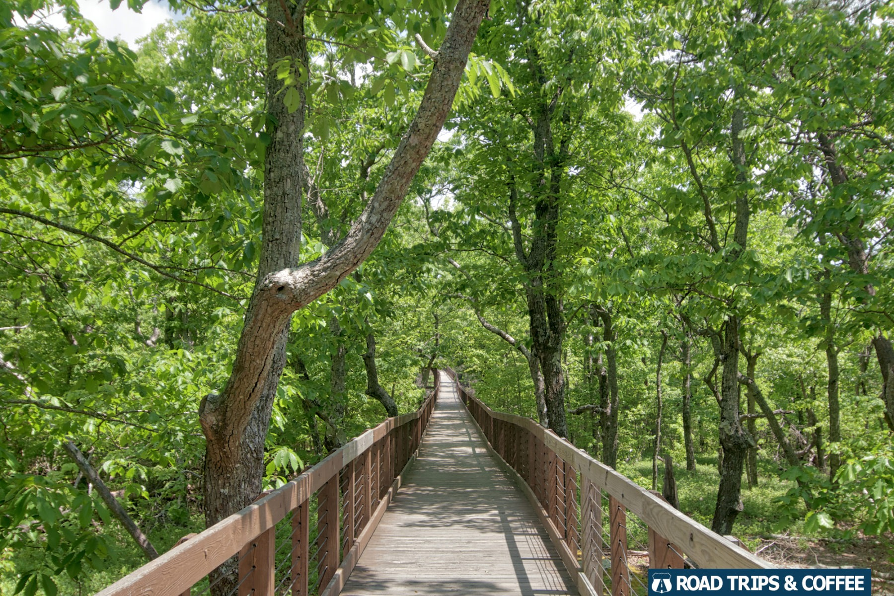 A long wooden boardwalk surrounded by trees at Cheaha State Park in Alabama.