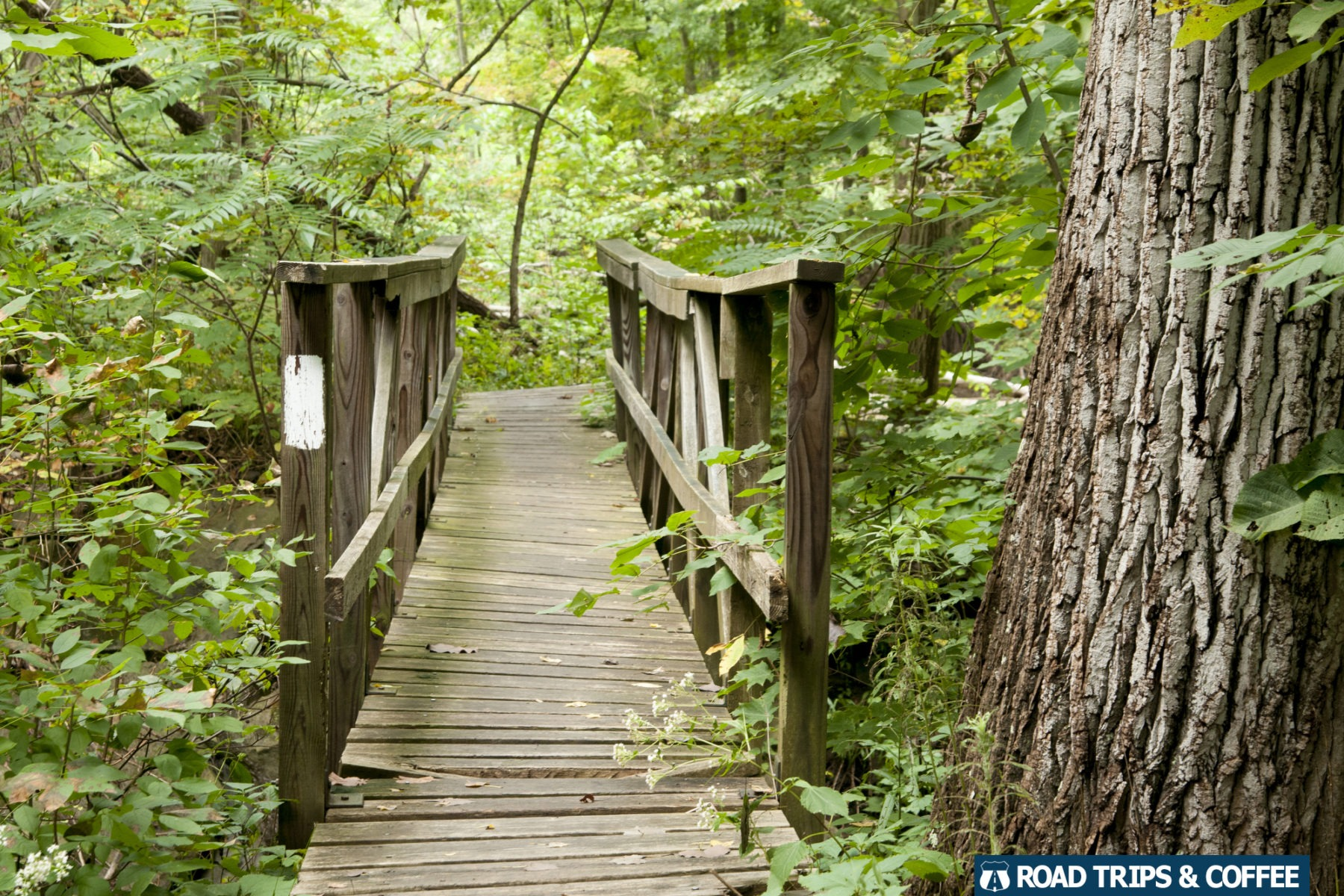 A wooden boardwalk in the woods along the Finger Lakes Trail in Hammondsport, New York