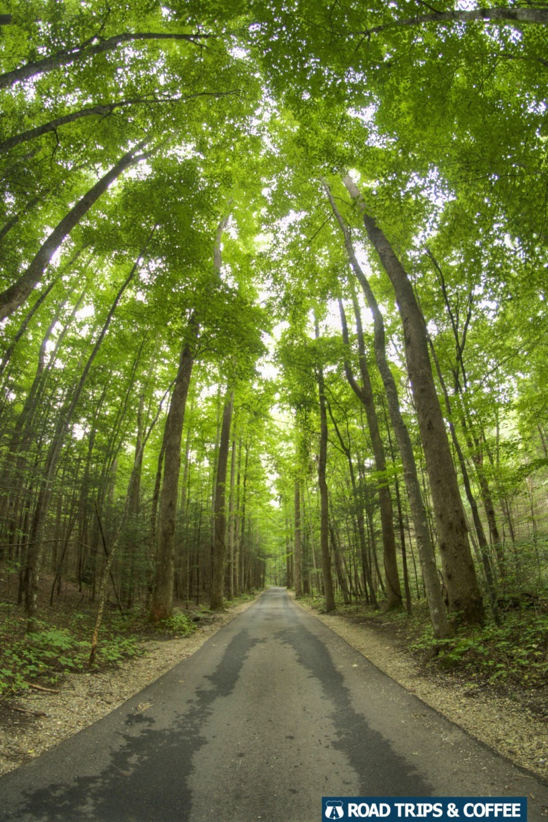 A one-lane paved road passes through a towering forest at the Roaring Fork Motor Nature Trail in the Great Smoky Mountains National Park