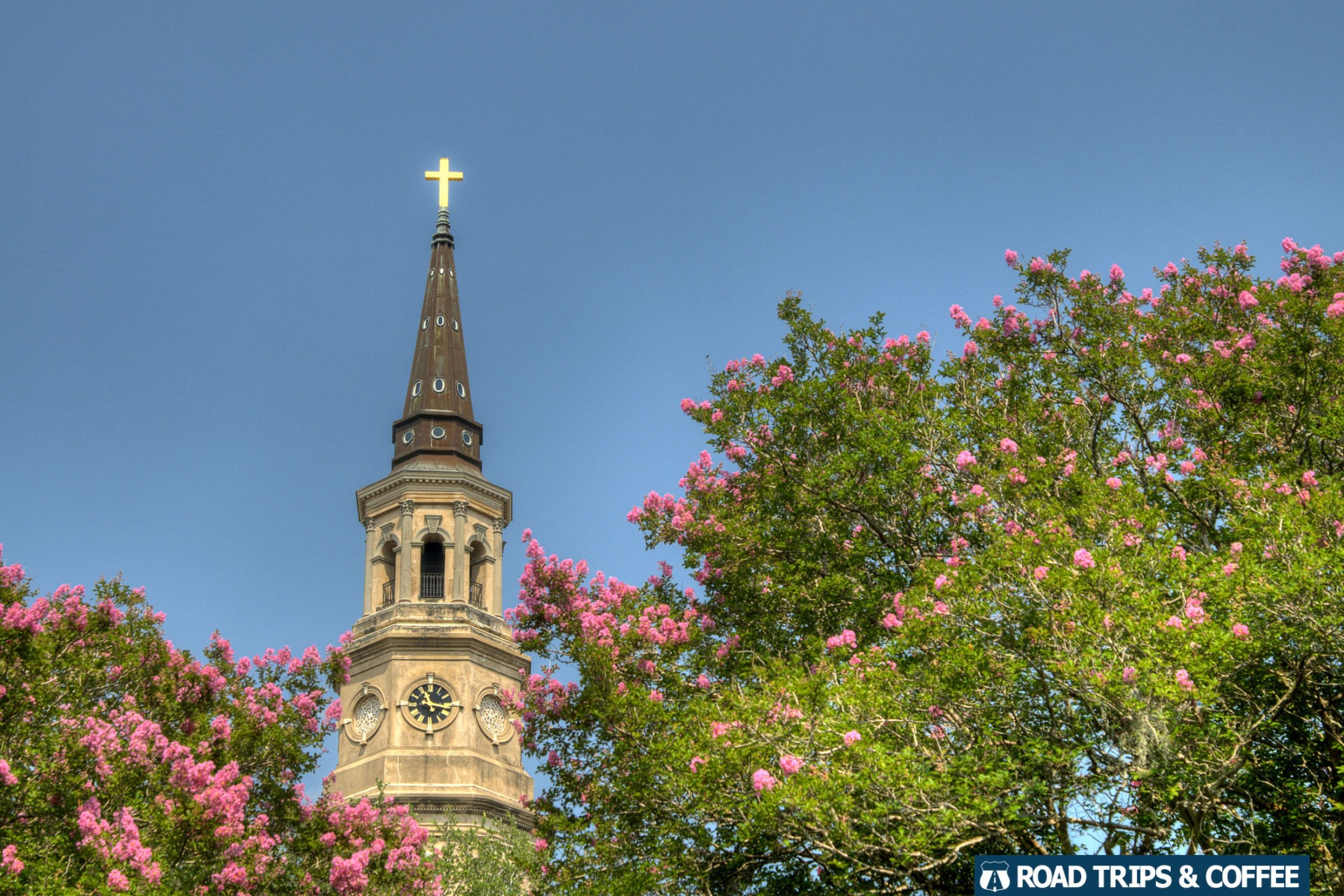 Pink azaleas bloom near the steeple of Saint Phillips Episcopal Church in Charleston, South Carolina