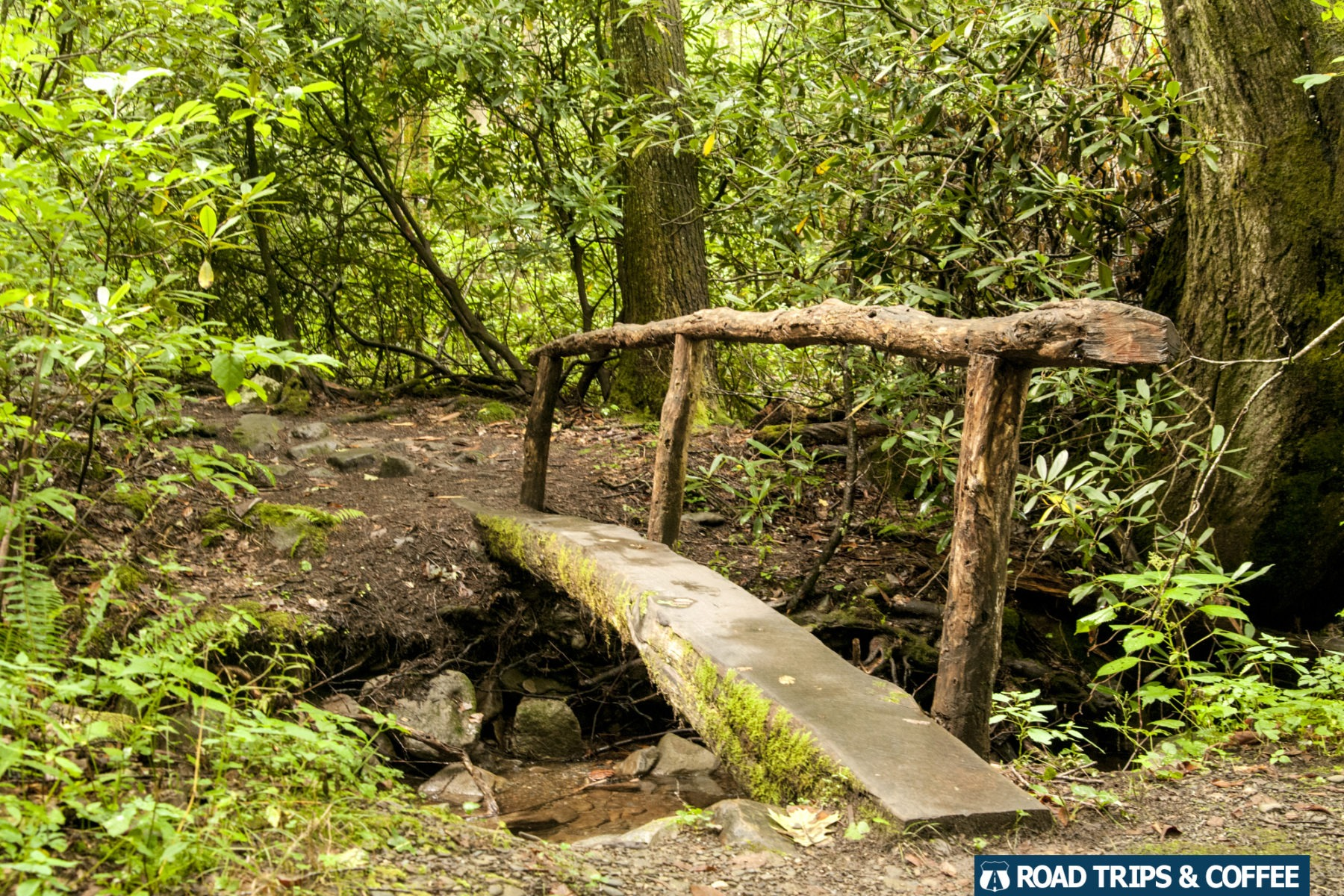 A narrow rustic footbridge made from a fallen tree crosses a small creek in the Great Smoky Mountains National Park