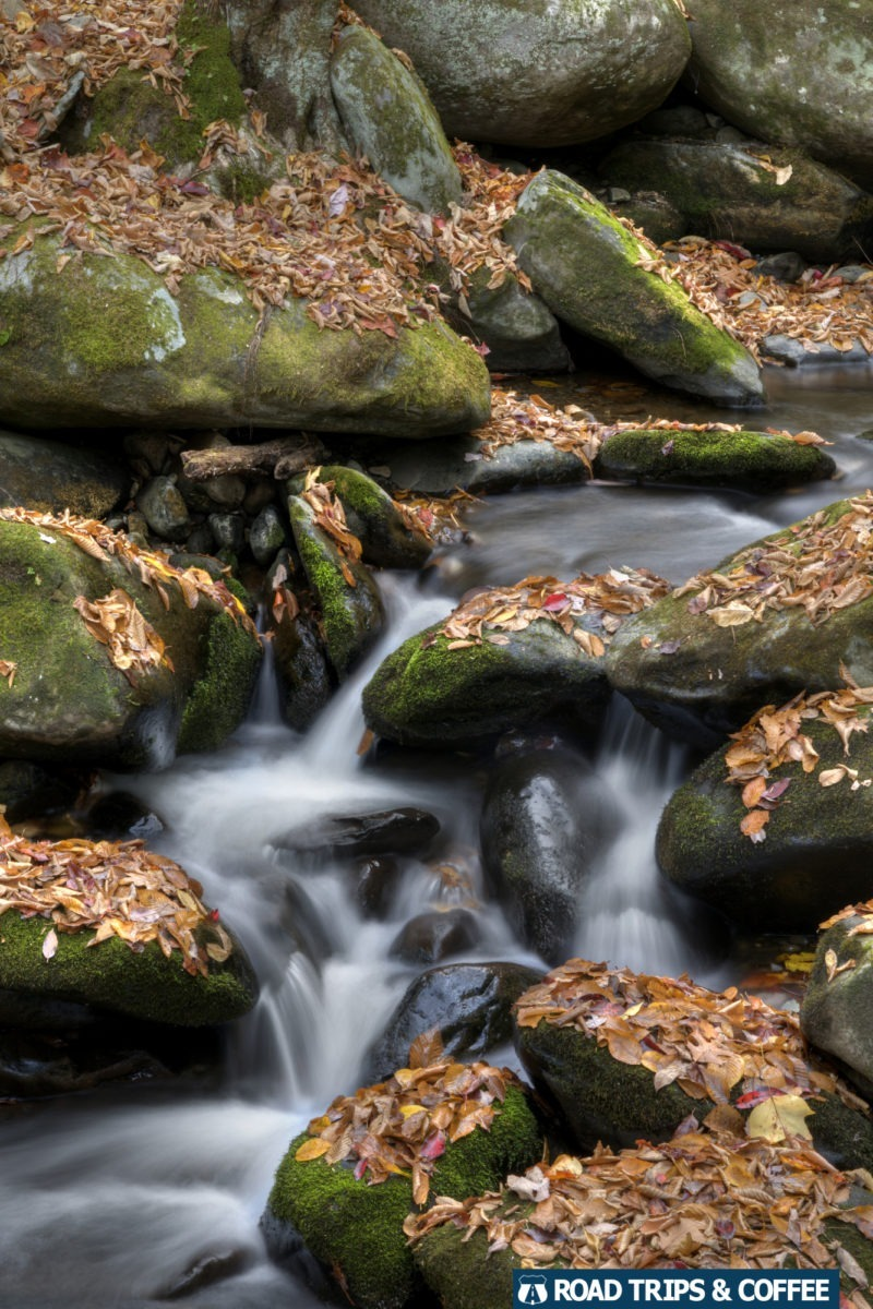 Water rushes around smooth rocks covered in fallen leaves in the Great Smoky Mountains National Park
