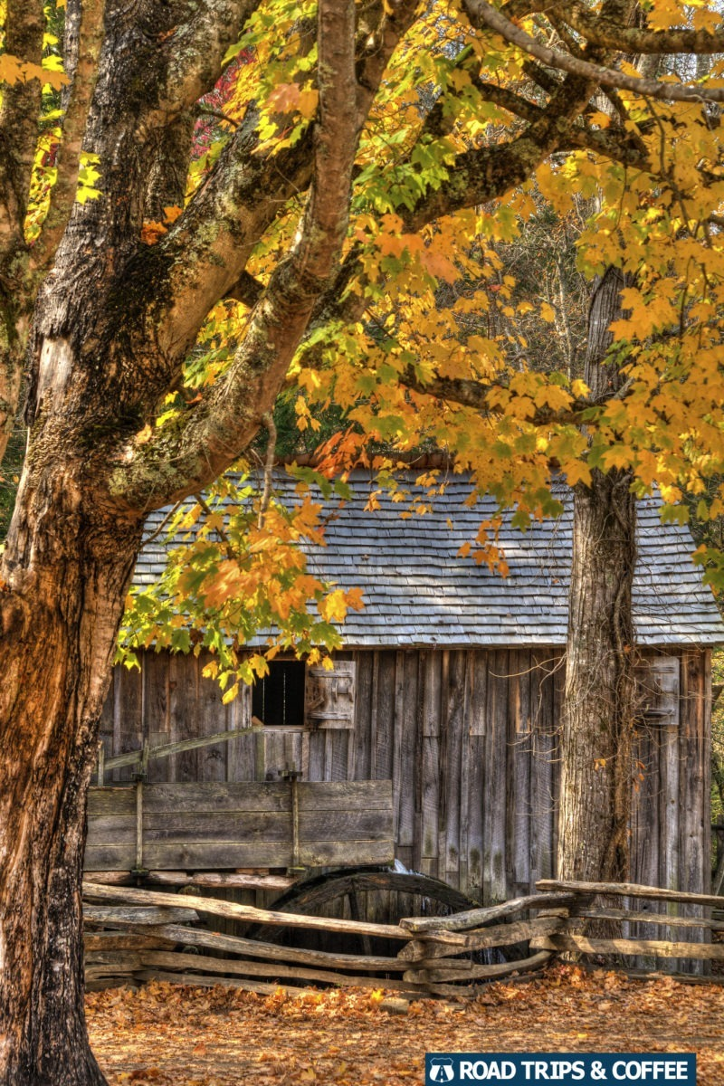 Vibrant yellow fall colors surround the Cable Mill in Cades Cove in the Great Smoky Mountains National Park