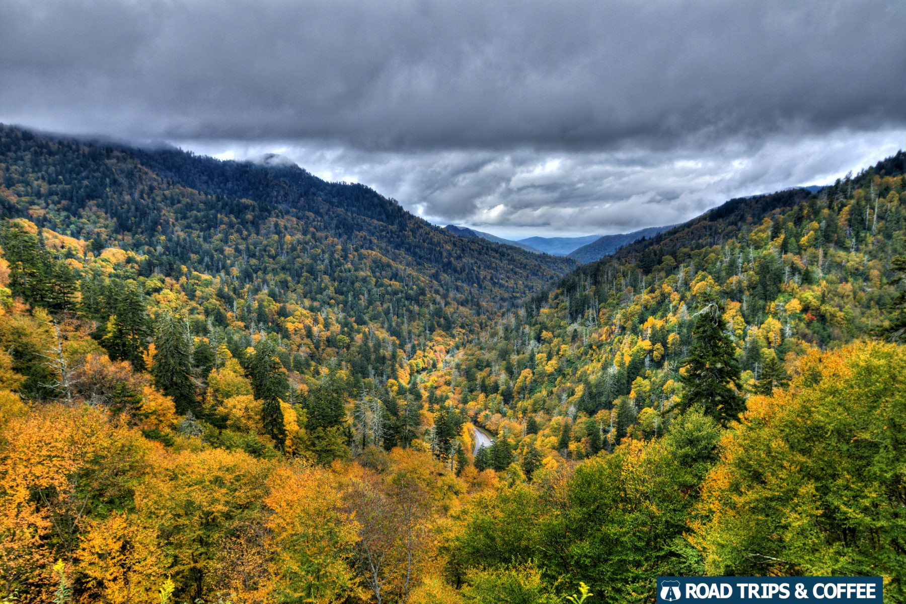 Yellow fall colors contrast the deep green evergreens throughout the Great Smoky Mountains National Park