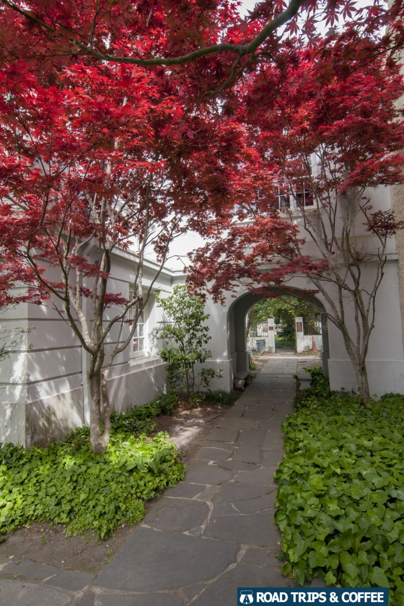 A vibrant red tree blooms along a trail in Charleston, South Carolina