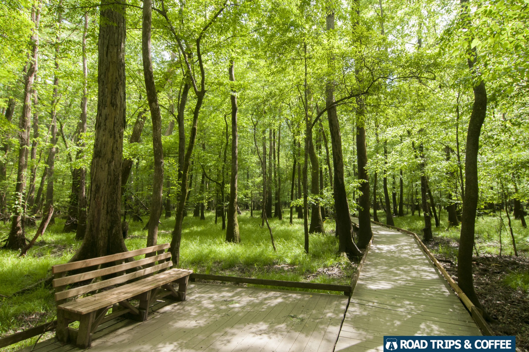 A wooden boardwalk stretches along between towering trees with a bench for enjoying the view at Congaree National Park in South Carolina