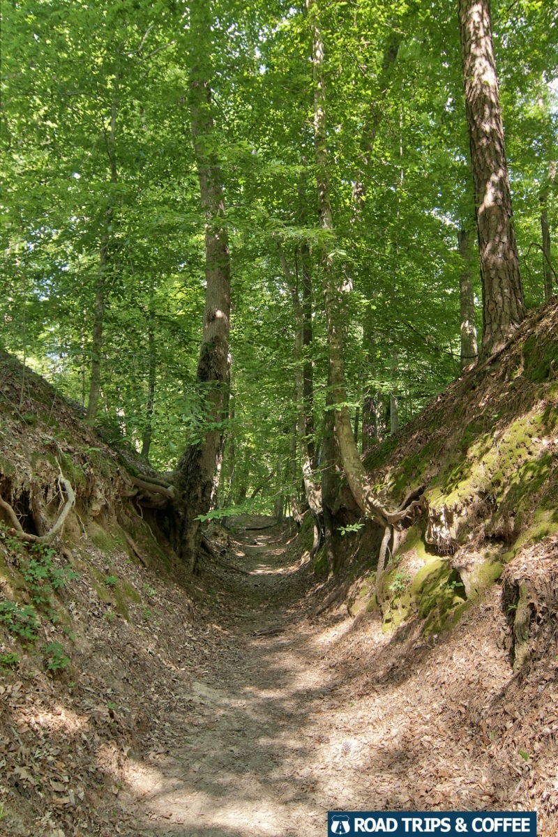 A short section of trail passes between two trees along the Sunken Trace at Milepost 41.5 on the Natchez Trace Parkway in Mississippi