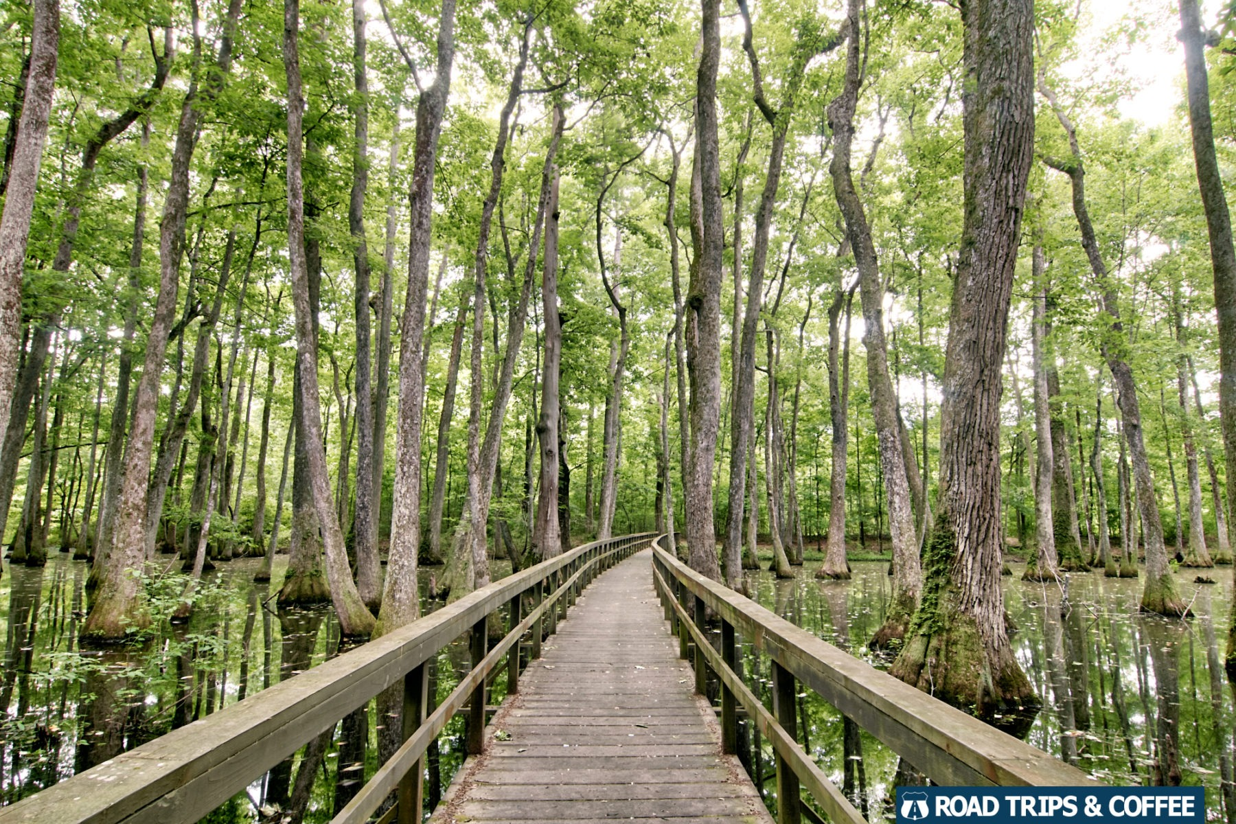 A long wooden boardwalk crosses Cypress Swamp on the Natchez Trace Parkway in Mississippi