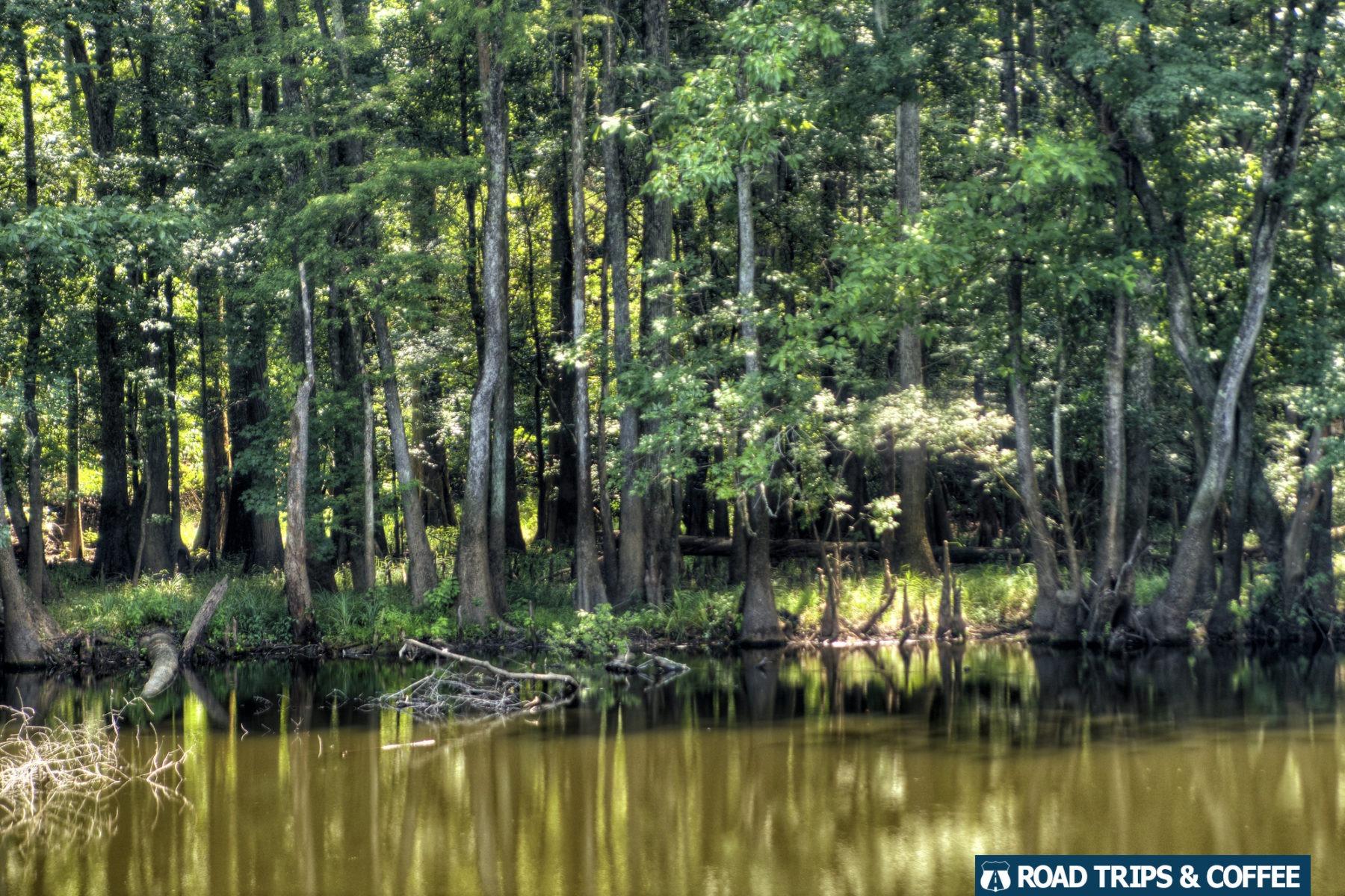 Forest surrounding Weston Lake at Congaree National Park in South Carolina.