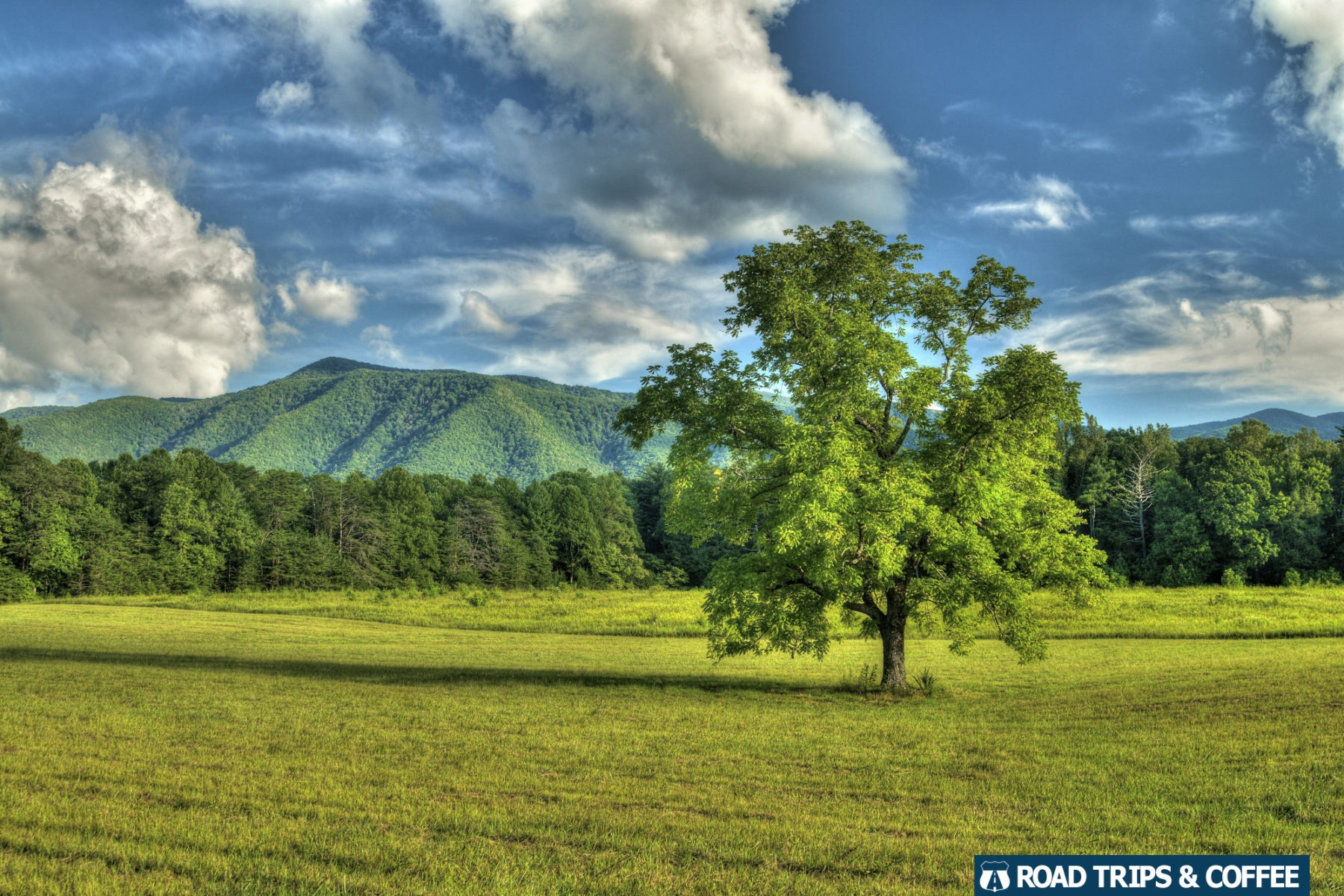 A lone tree in a large field in Cades Cove in the Great Smoky Mountains National Park in Tennessee