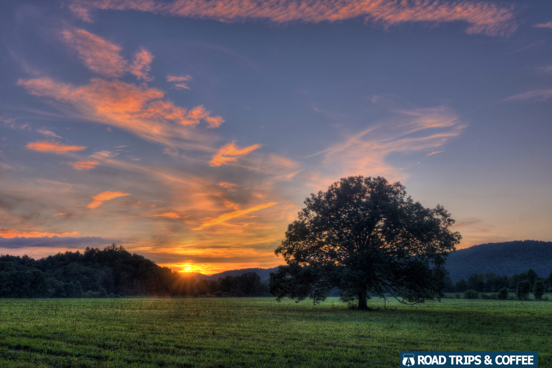 A warm sunset across the sky with a long tree in a large grassy field at Cades Cove in the Great Smoky Mountains National Park in Tennessee