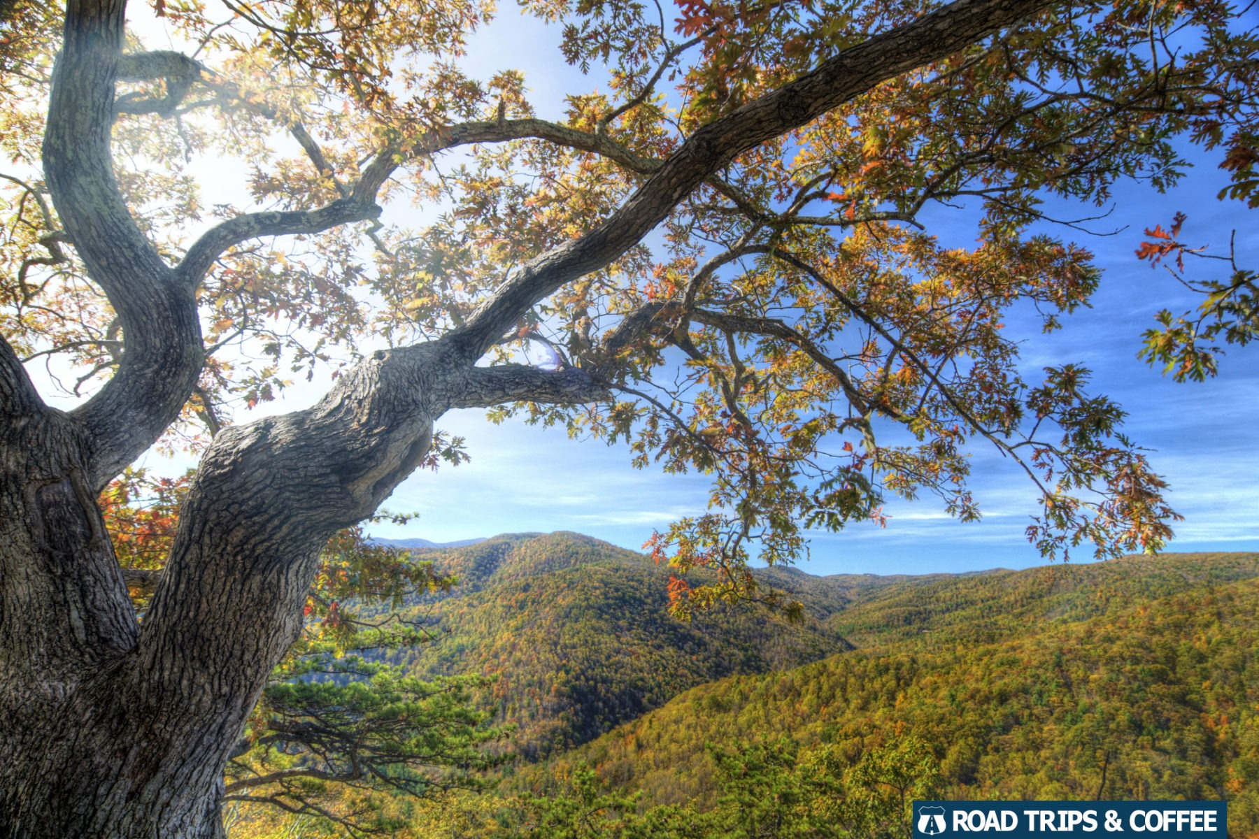The sun shines through a tree during the fall colors on the Blue Ridge Parkway in Virginia