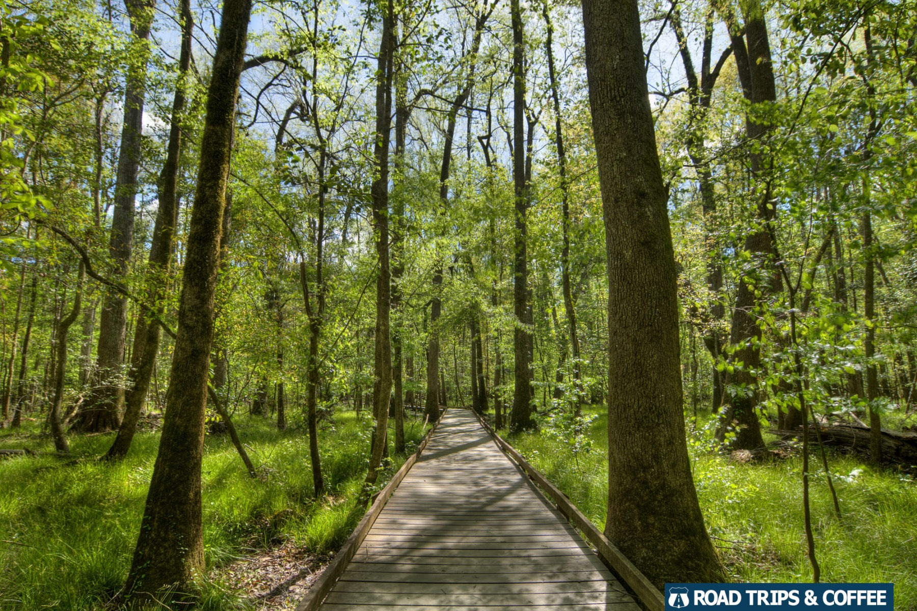 The wooden Boardwalk Loop Trail through the tall trees of Congaree National Park in South Carolina