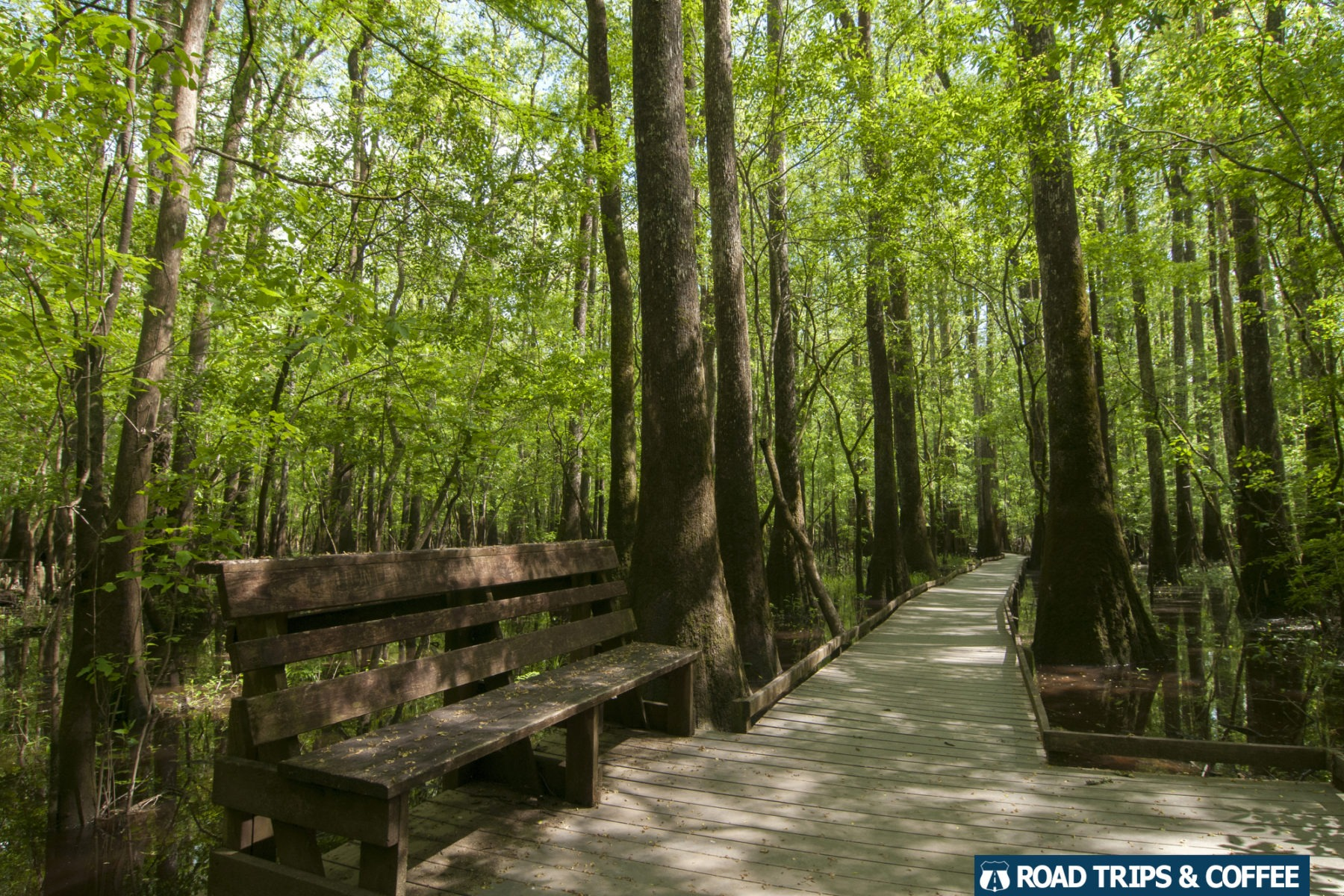 A bench along the wooden Boardwalk Loop Trail at Congaree National Park in South Carolina