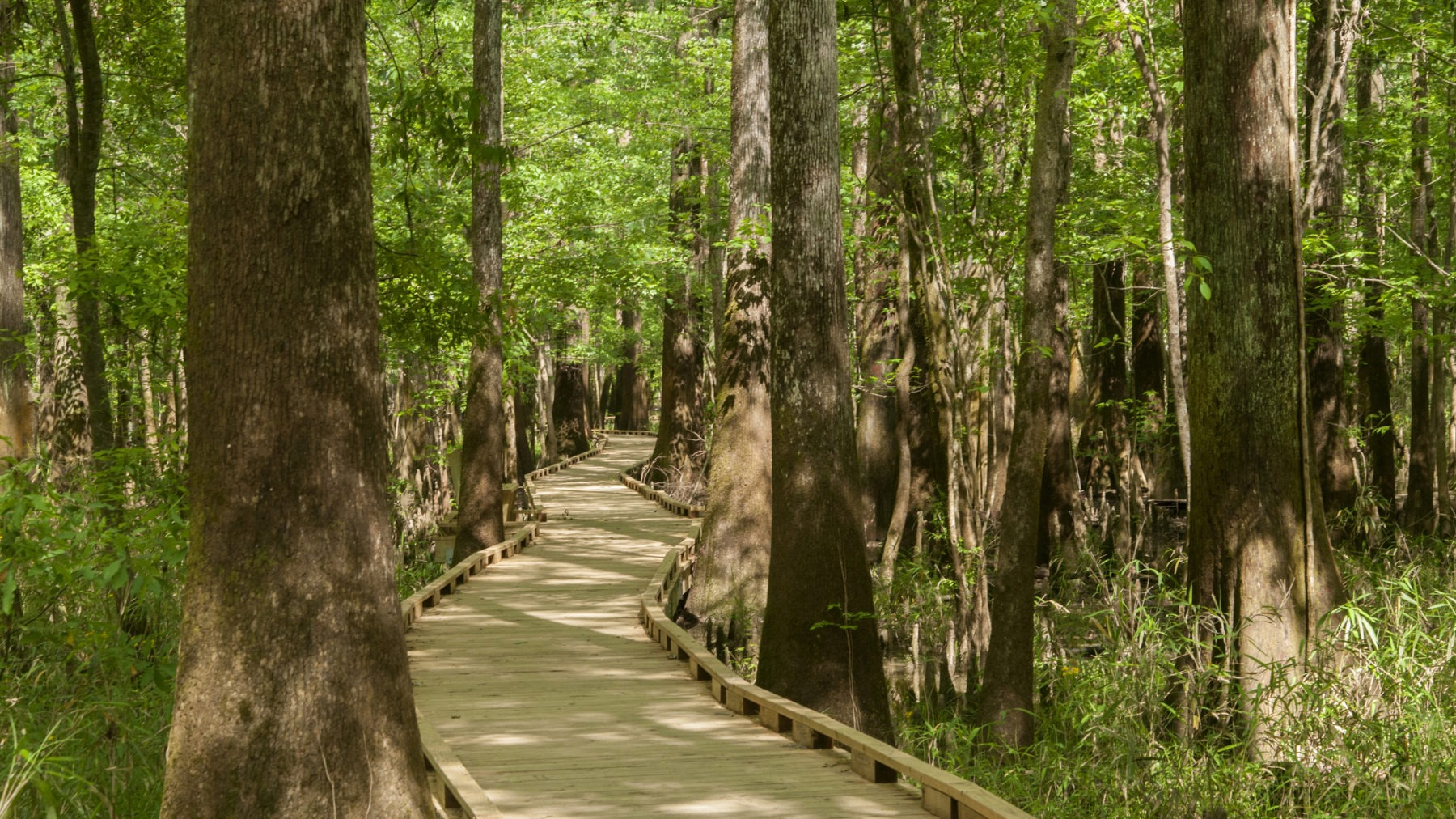 Lower Boardwalk at Congaree National Park
