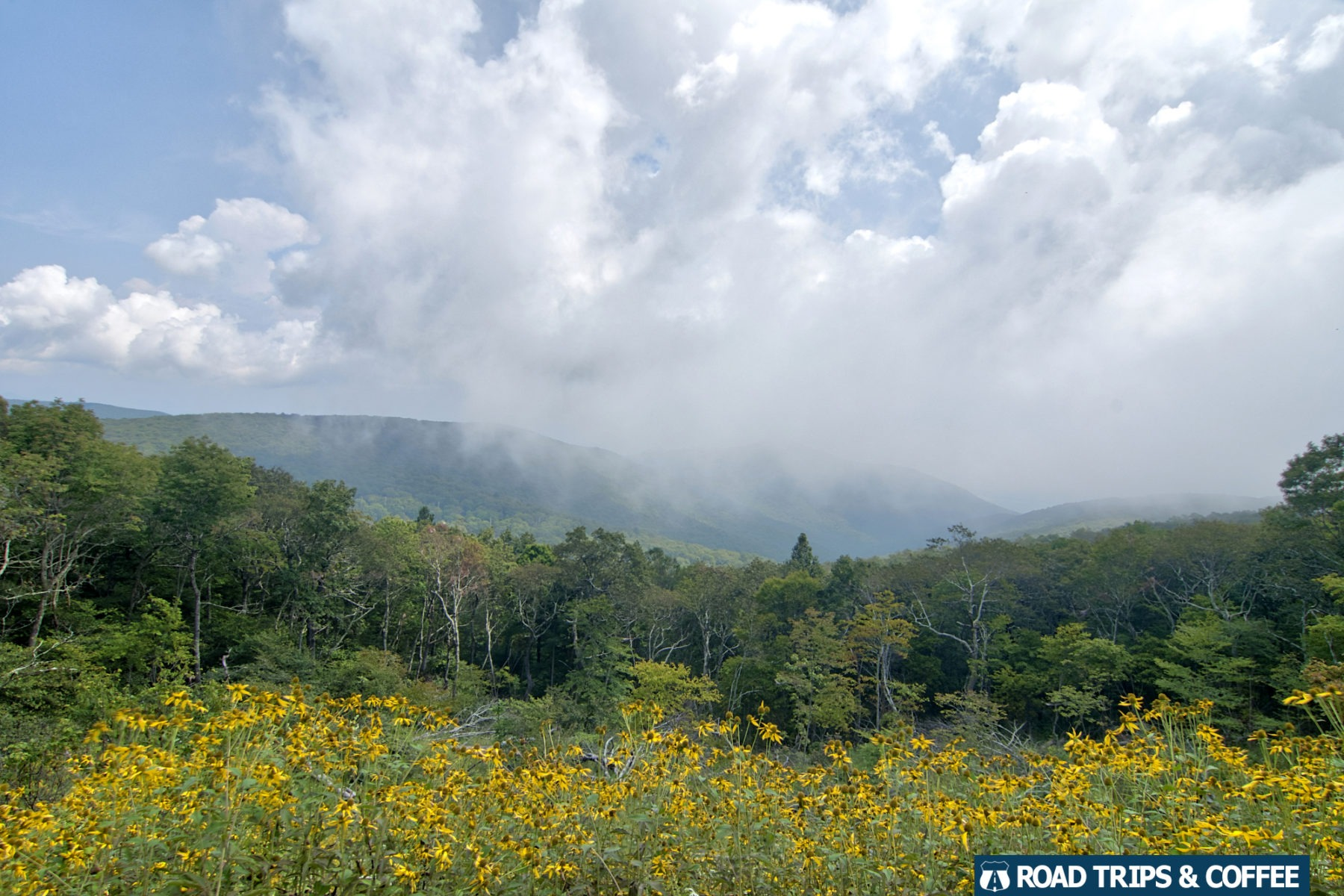 Clouds obscure the view beyond a field of blooming spring flowers at Apple Orchard Mountain Overlook on the Blue Ridge Parkway in Virginia