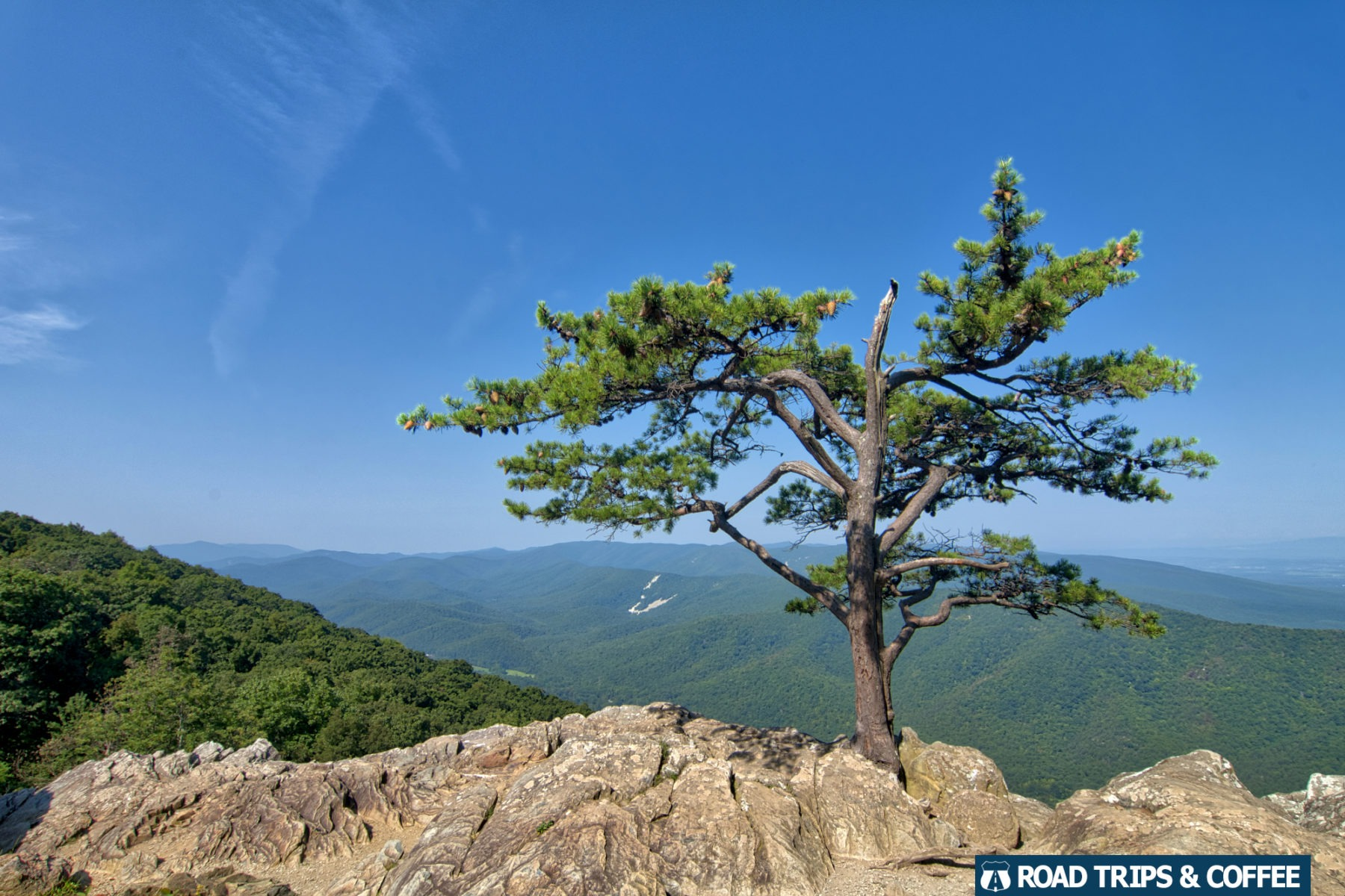 A single tree at the edge of a rocky cliff at Ravens Roost Overlook on the Blue Ridge Parkway in Virginia